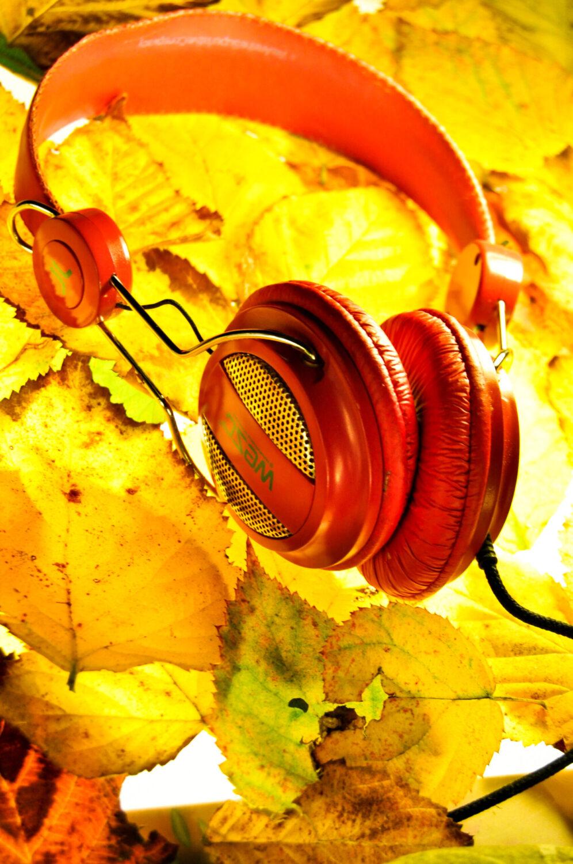 casque audio rouge posé sur un tapis de feuilles mortes jaunes